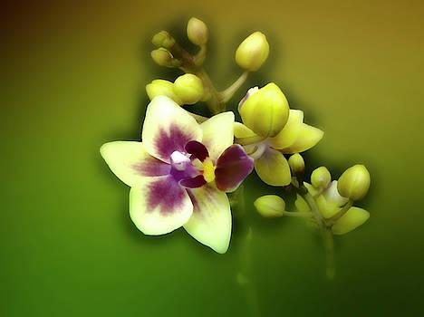 Beautiful Small Orchids by Johanna Hurmerinta