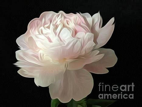 Beautiful Soft Pink Peony by Jeannie Rhode