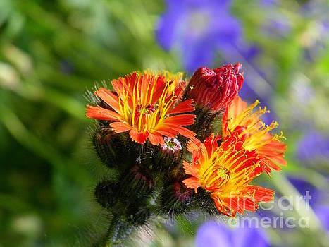 Beautiful Wildflowers by Art Sandi