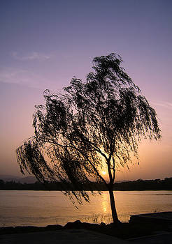Beautiful Willow Tree by lake at sunset by Steve Clarke
