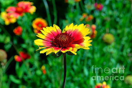 Beauty in red and yellow by Jeff Swan