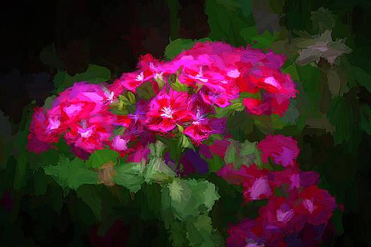 Beauty in the Garden by Ernie Echols