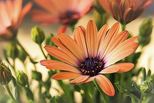 Beauty In The Garden by Ken Mickel