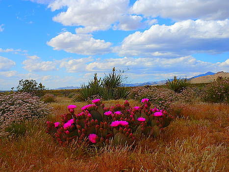 Beauty Of The Desert by James Welch
