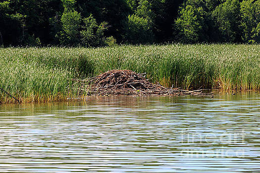 Beaver lodge on Lake Champlain by Louise Heusinkveld