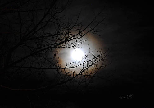Beaver Moon by Vallee Johnson
