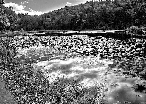 Beaver Pond by Betsy Zimmerli
