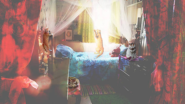 Bedroom Of Cats by Suzanne Powers