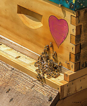 Bee Still My Heart by Brian Wallace