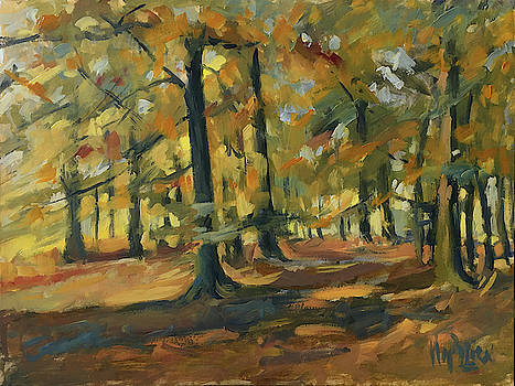 Beeches in Autumn by Nop Briex