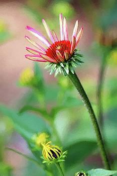 Beginning to Bloom by Carol Montoya