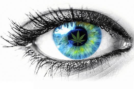 Behind Blue Eyes by Pat Cook