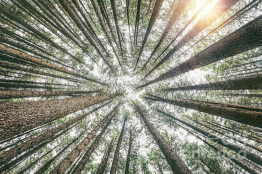 Below The Treetops by Evelina Kremsdorf