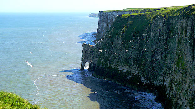 Bempton Cliffs in Springtime, Yorkshire Coast by Chris Gill