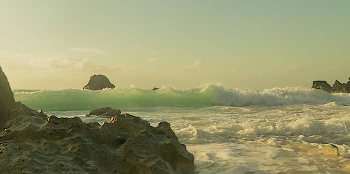 Bermuda Morning Glory Beach by Betsy Knapp