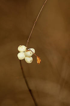 Berries by Bob Cournoyer