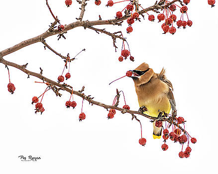 Berry Branch by Peg Runyan