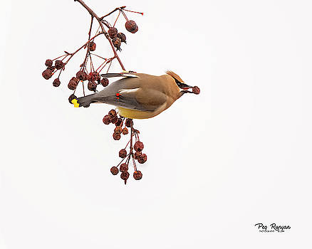 Berry in the Beak by Peg Runyan