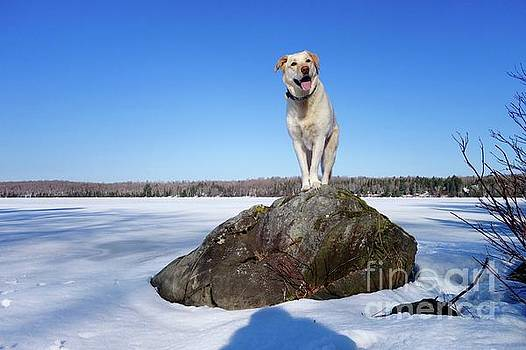 Betsy on the Rock by Sandra Updyke