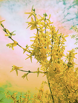 Bewitching Forsythia Flowers by Patricia Keller