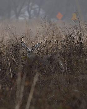Big Buck by Paul Ross
