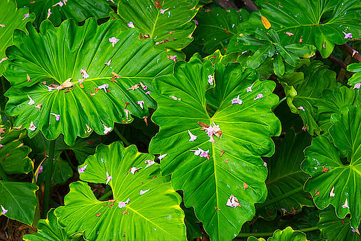 Big Green Leaves by Tom Gresham