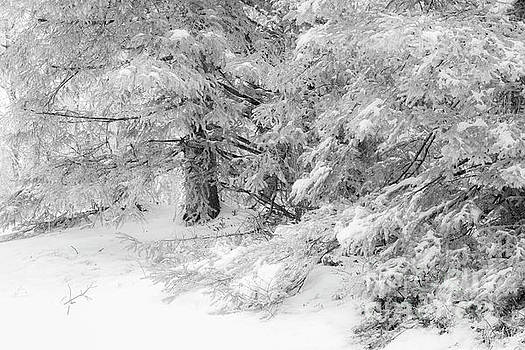 Big Pine Monochrome by Sharon Mayhak