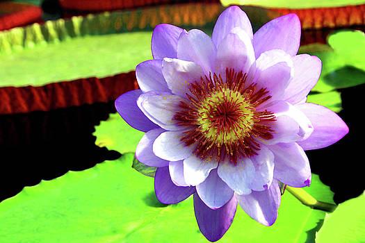 Big Purple Lil by Debra Orlean