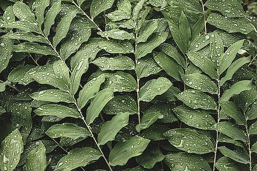 Big Raindrops, Green Leaves by Bruce Davis