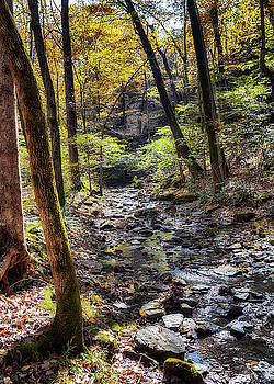 Susan Rissi Tregoning - Big Rocky Hollow Stream