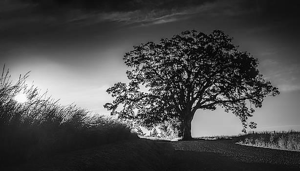 Big Tree at Sunrise by Don Schwartz