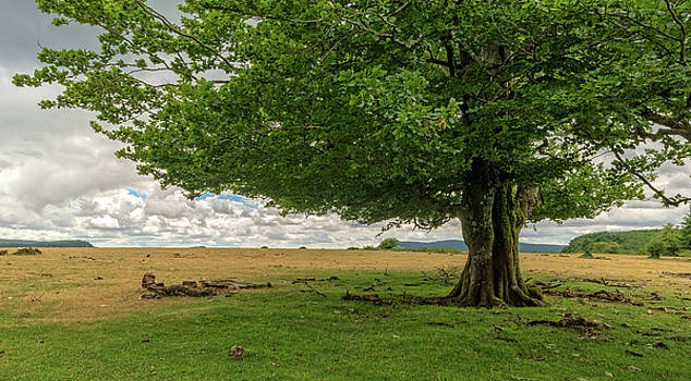 Big tree by Vicen Photography
