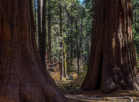 Big Trees, Little People by Martin Gollery