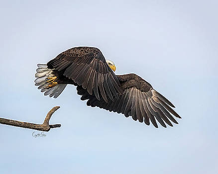Big Wings by Crystal Socha