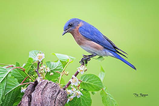 Billy Blue Bird by Peg Runyan