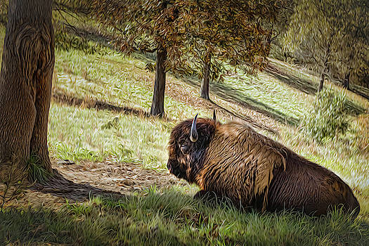 Billy Buffalo  by Mary Lynn Giacomini