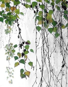 Birch Leaves by Jeanne Gadol