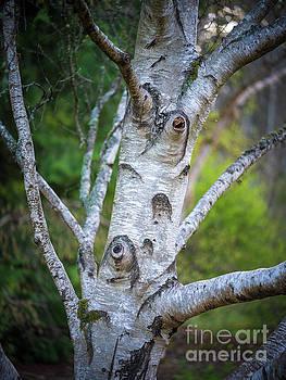 Birch Tree Details by Mike Reid