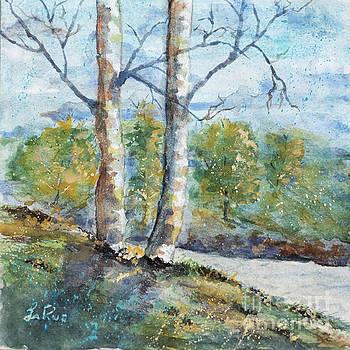 Birches by Betty LaRue