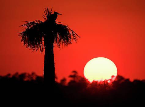 Bird and Sunset by Jeffrey Klug