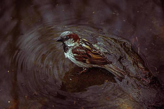 Bird Bath by Traci Asaurus