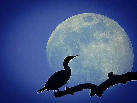 Bird In The Moonlight by Kathy Gail