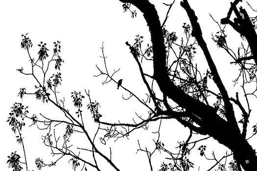 Bird in Tree Kingston Point Park by Tom Romeo