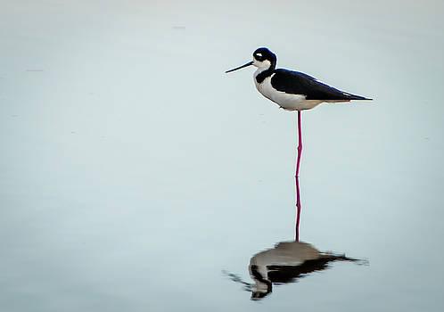 Bird in Water by Jeffrey Klug