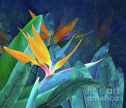 Bird of Paradise Under a Hawaiian Moon by J Marielle