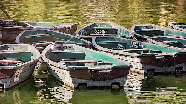 Bird on a Boat Barcelona Spain by Joan Carroll