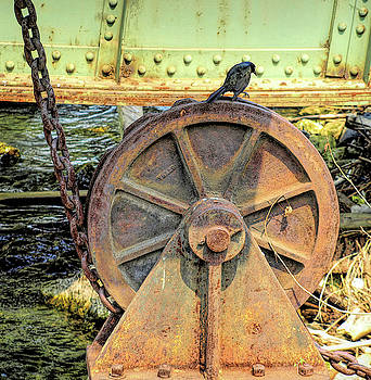 Bird On Wheel by Barry W King