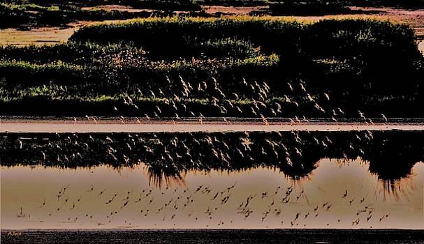 Bird Reflection X by John R Williams
