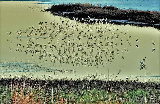 Bird Reflection XII by John R Williams