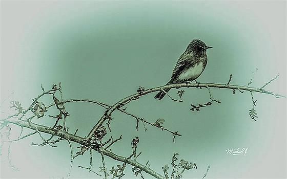 Birdie by Michael J Connor